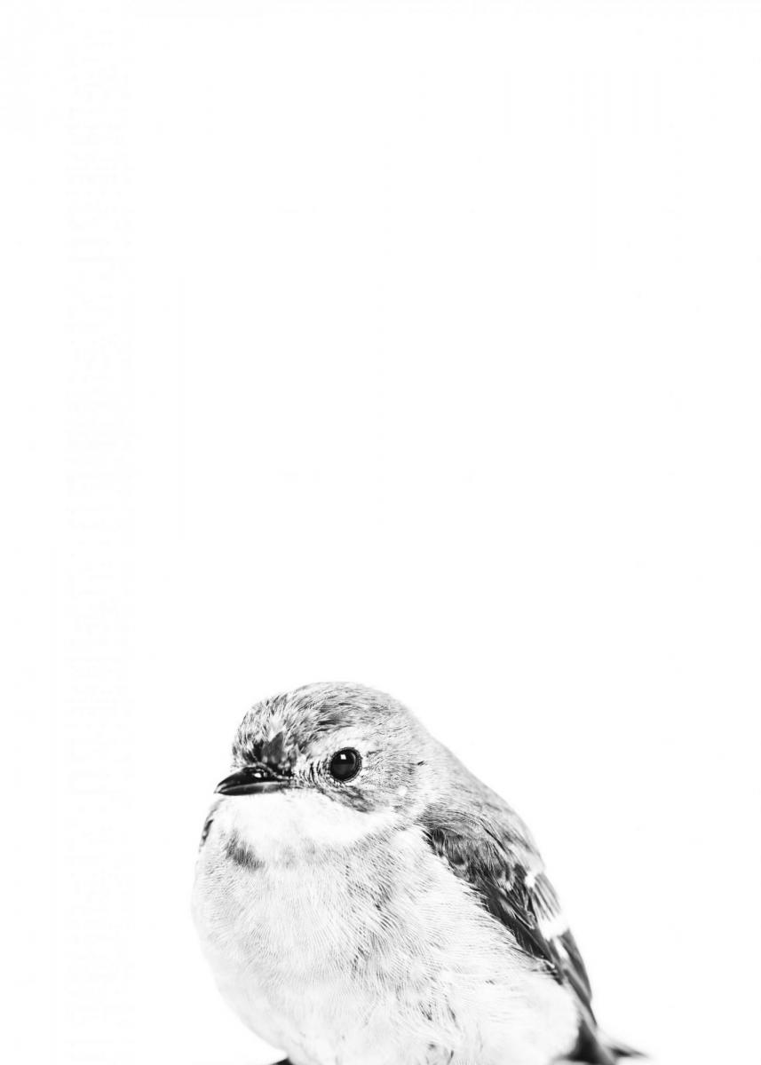 Little Bird B&W 30x40 cm