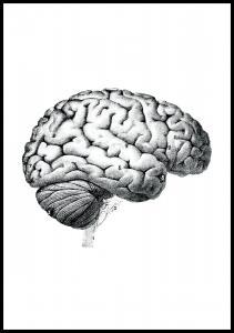 Skolhjärnans delar