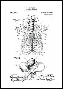 Patentritning - Anatomiskt Skelett II - 13x18 cm